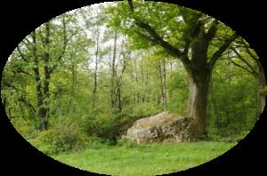 Outils, formations et voyages initiatiques